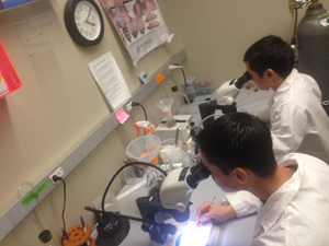 UC Merced students in lab.